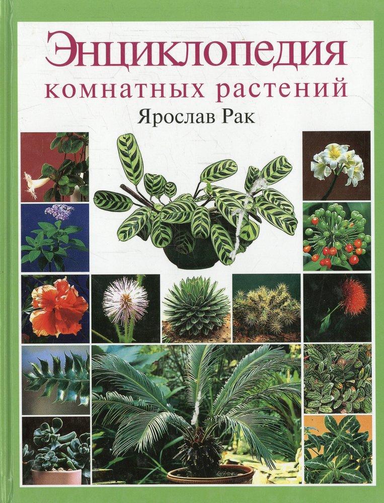 Энциклопедия комнатных растений .